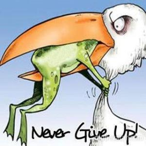 Frog Never Give Up Frog